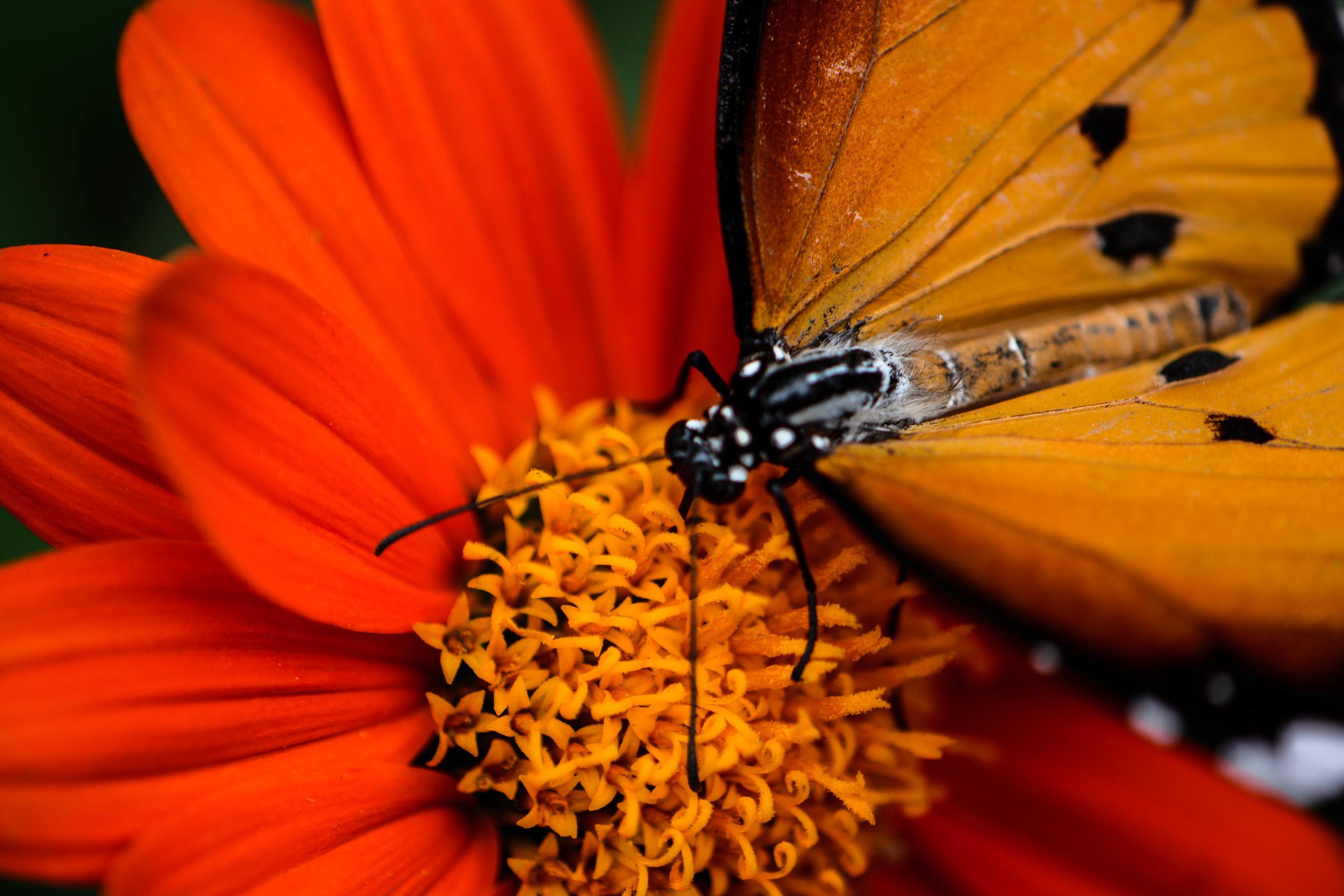 butterfly farm 2 (1 of 1).jpg