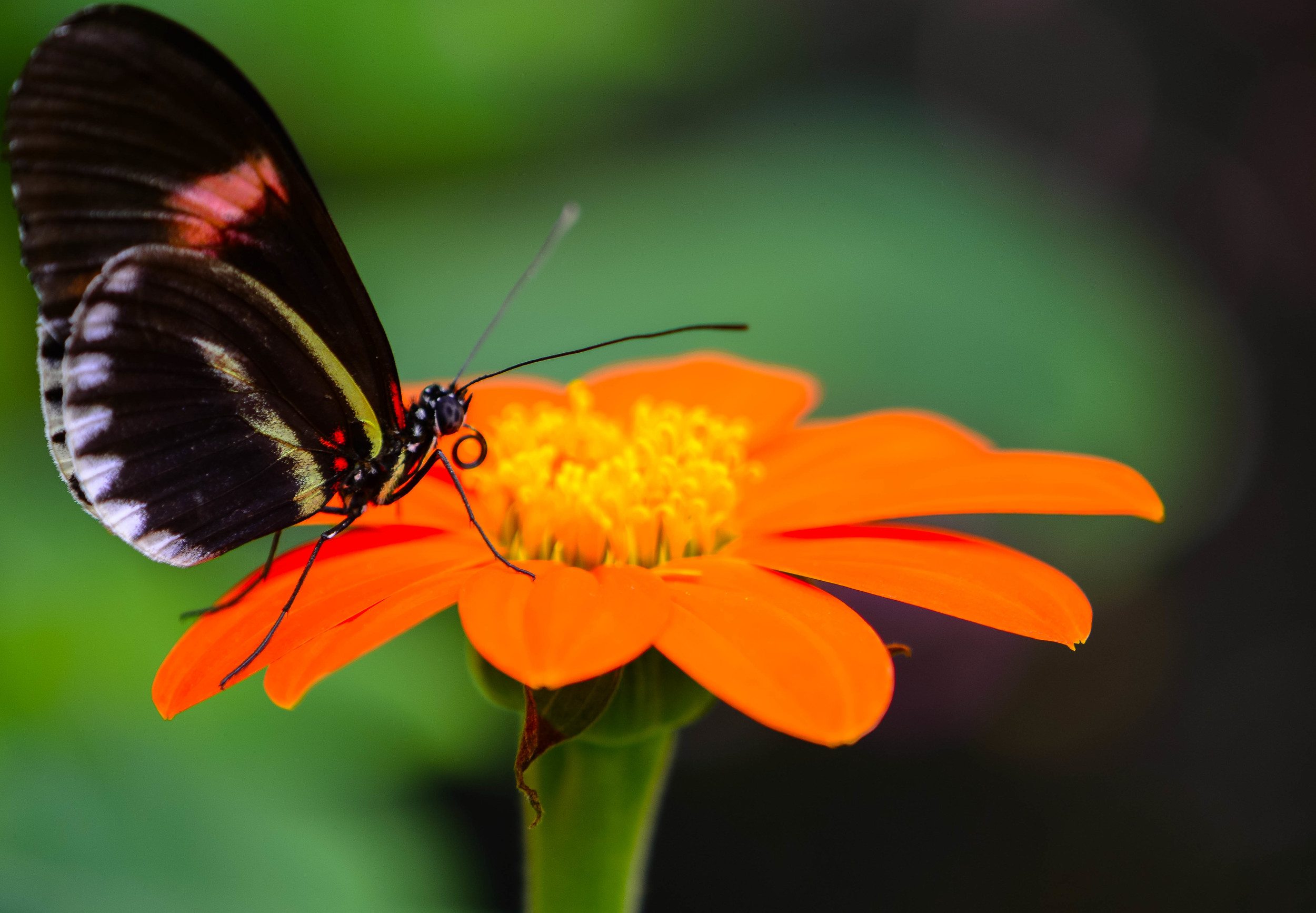 butterfly farm 7 (1 of 1).jpg