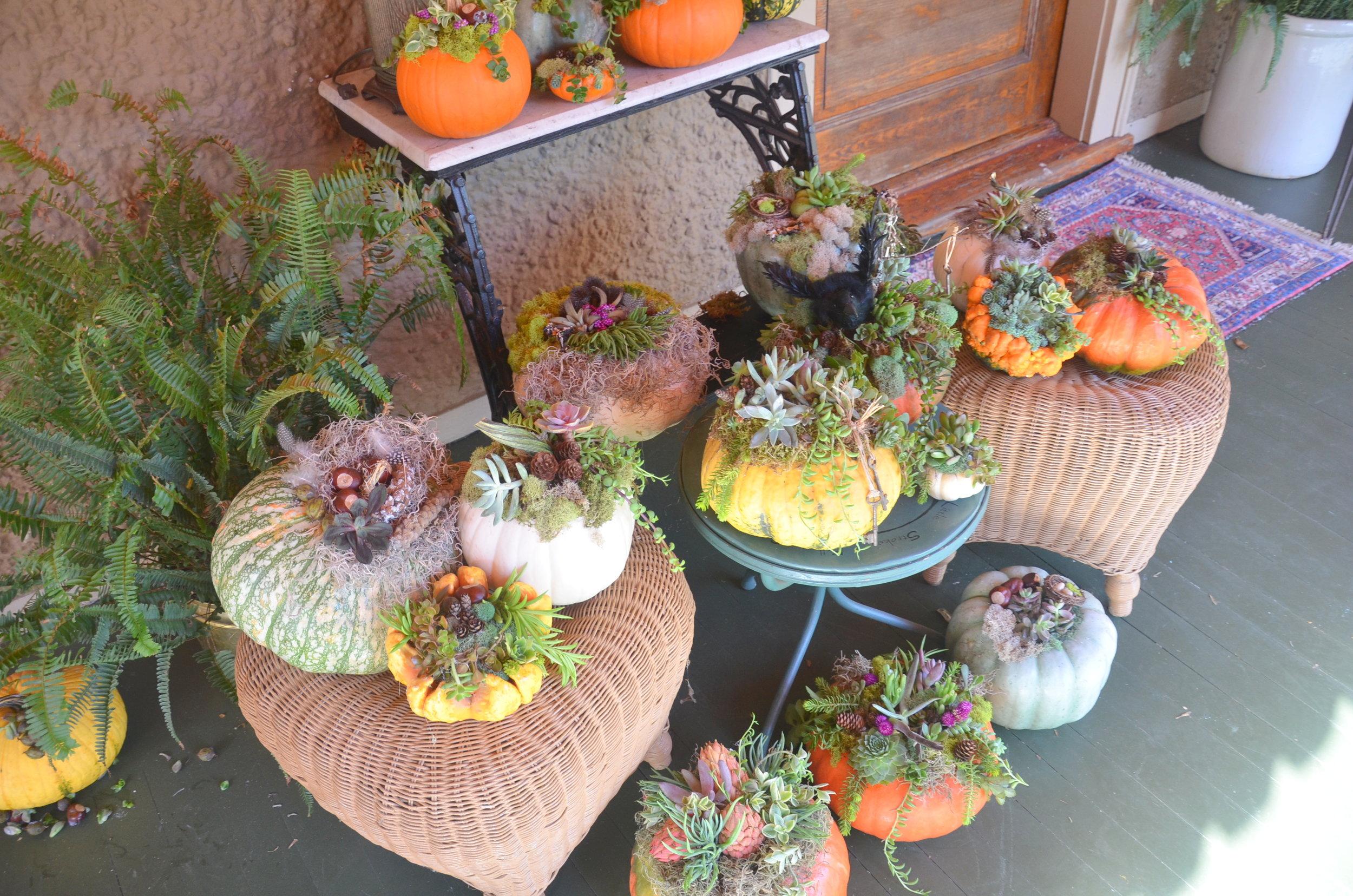 pumpkin group.JPG