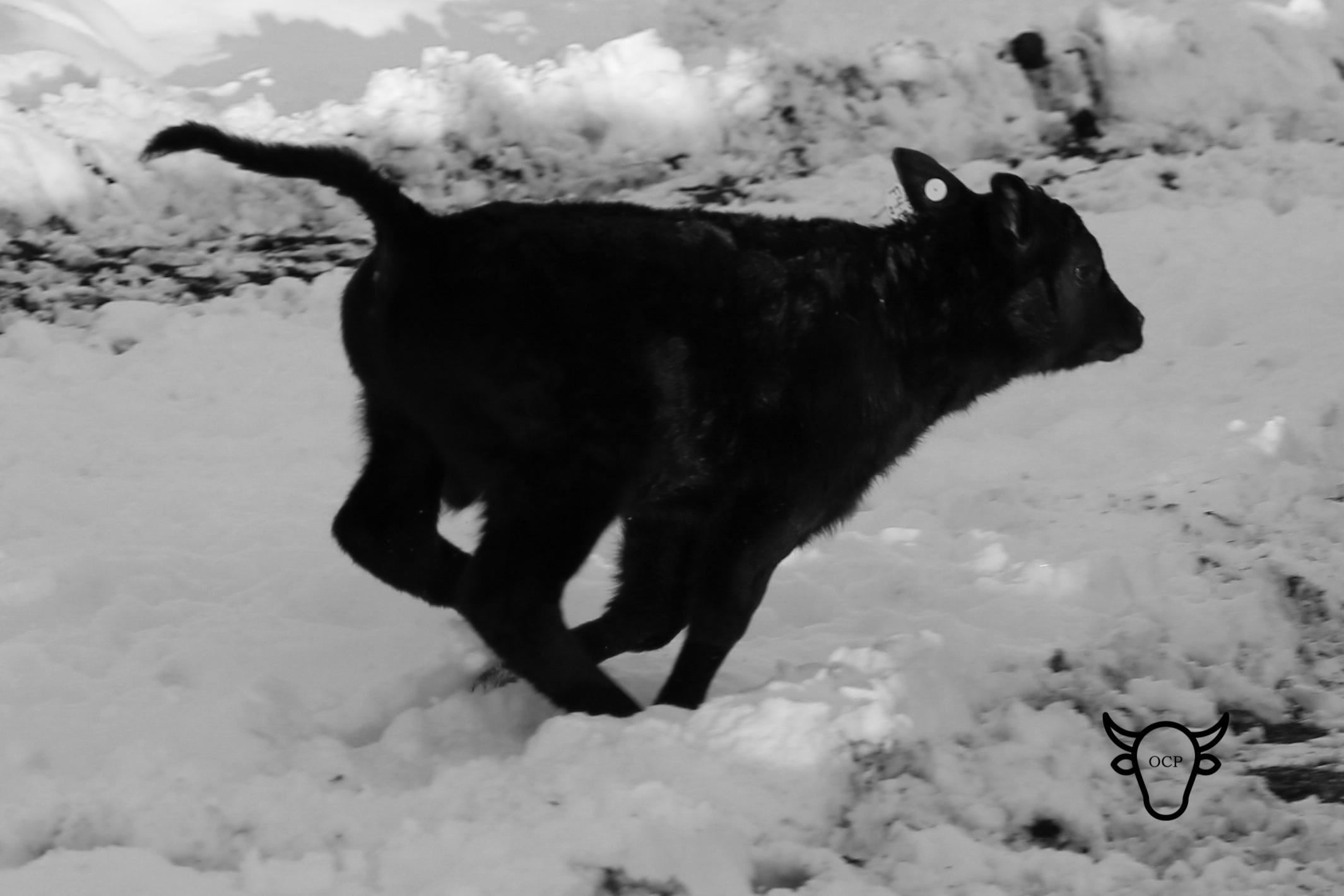 calvin run feb 14.jpg