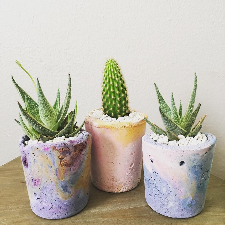 Cactus Makes Perfect Denton