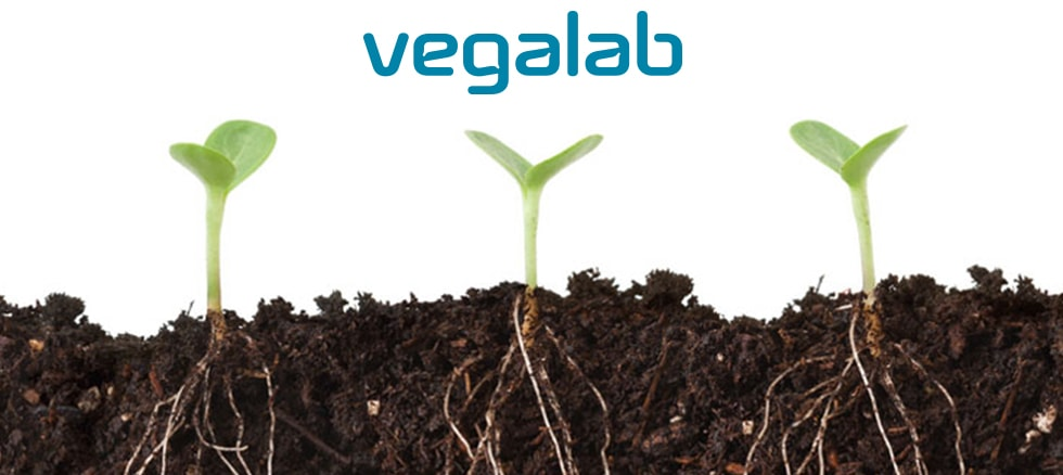 plant-talk1.jpg