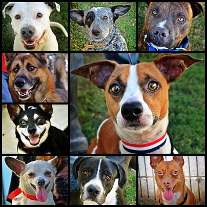 Here are a few of the dogs that currently need treatment.