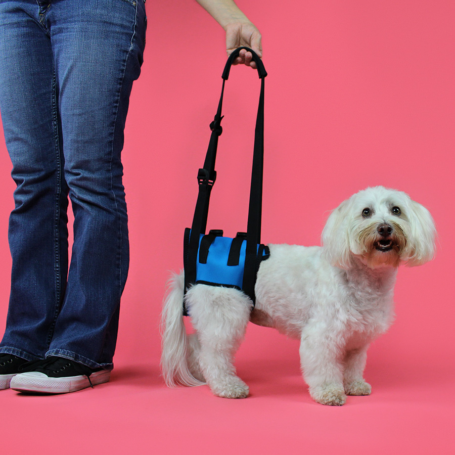 dog mobility harness rear