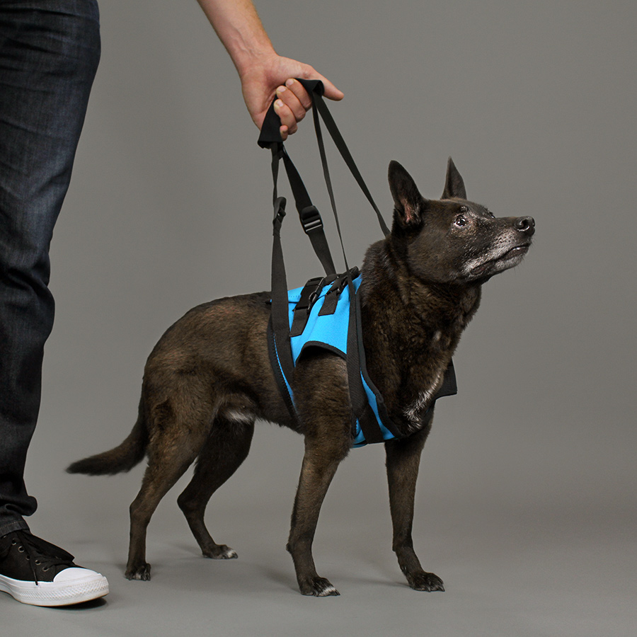 dog mobility harness front
