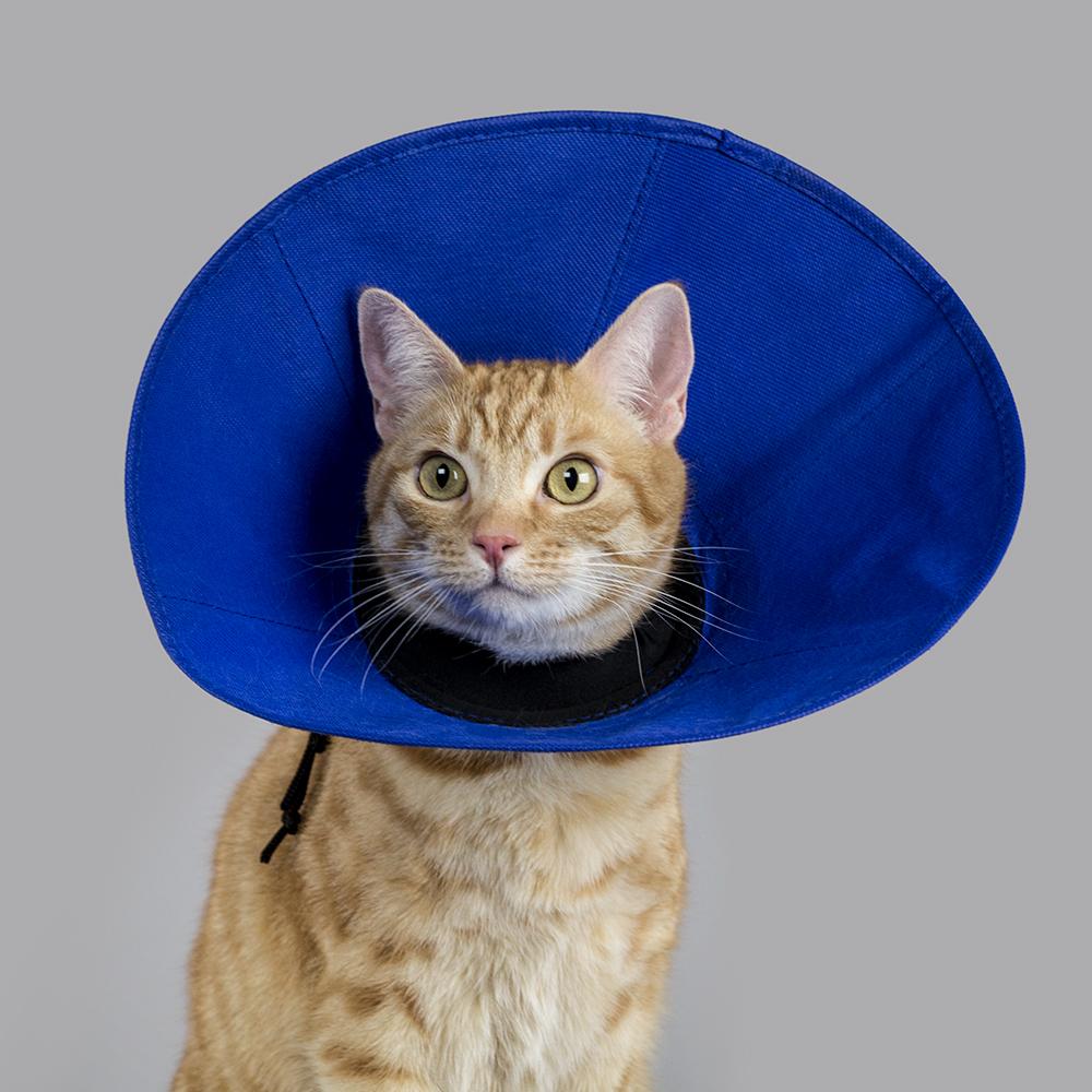 KVP Cone of shame E-collar - ez soft collar feline cat recovery collar