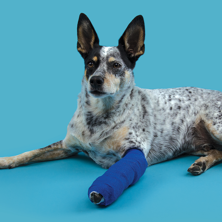 KVP thermoplastic moldable veterinary splints