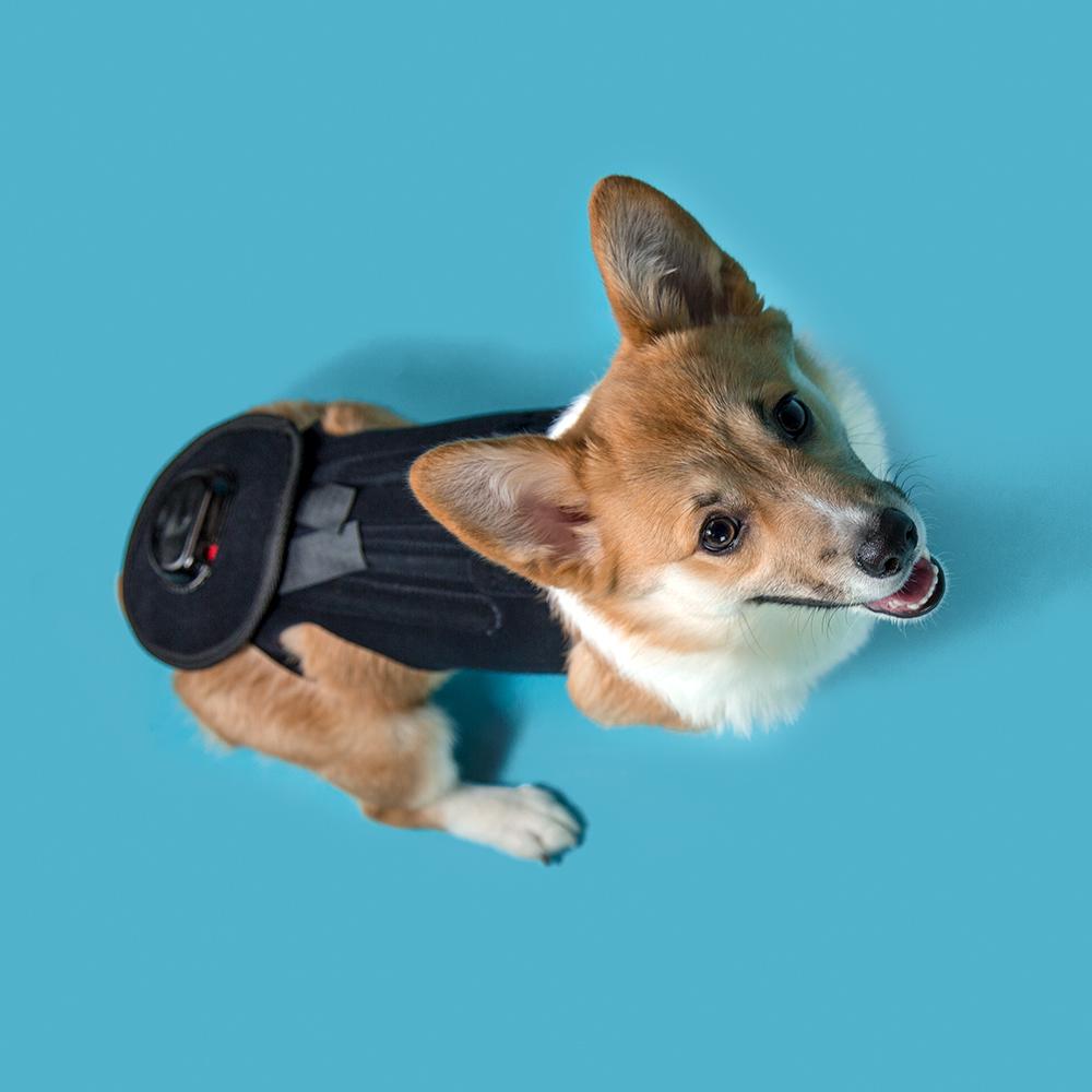 IVDD Back Bracer for dogs intervertebral disc disease