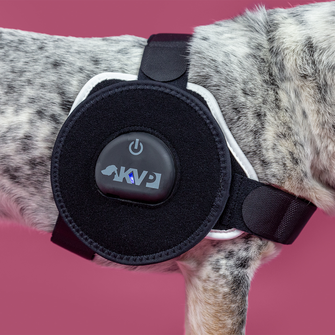 PEMF Technology therapy for dogs KVP Cura Patch