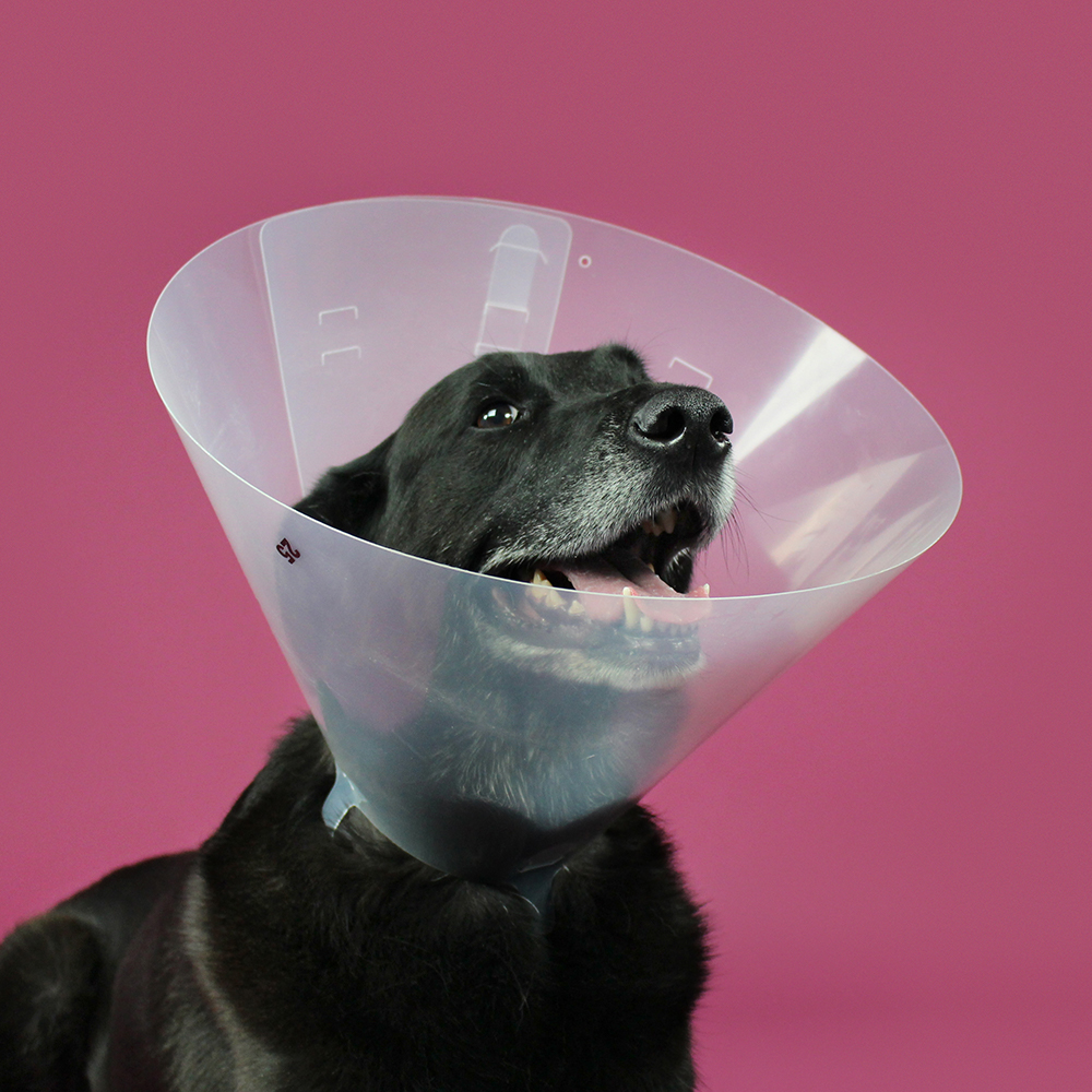 KVP Cone of shame E-collar - Betsy Clear