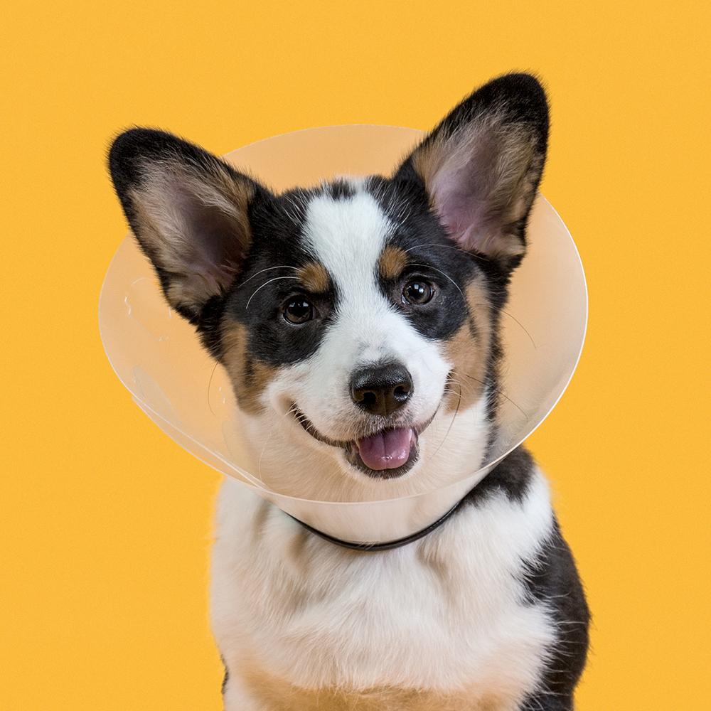 KVP Cone of shame E-collar - Check