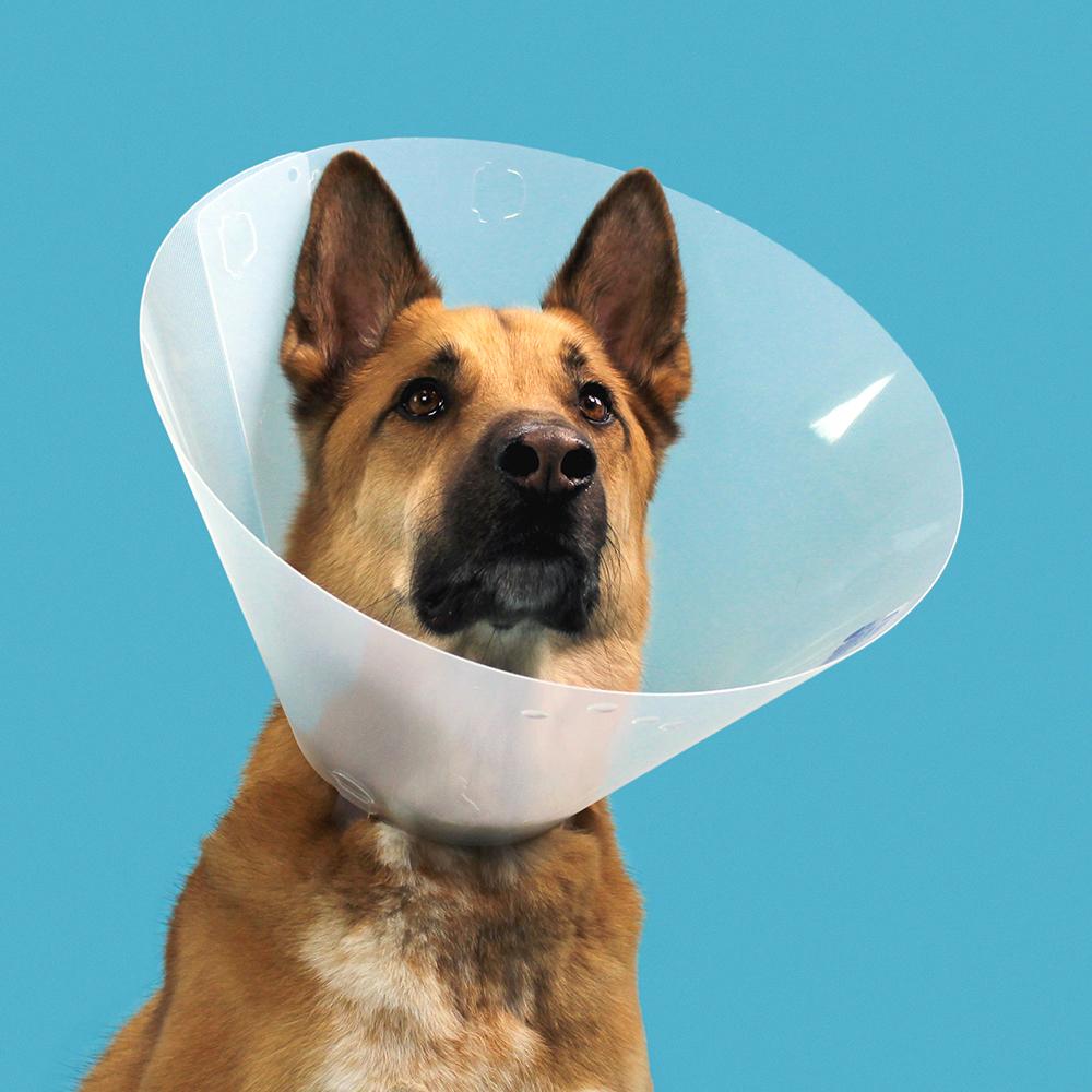 KVP Cone of shame E-collar - QuickFit