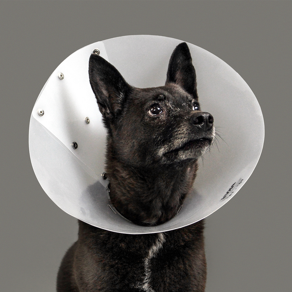 KVP Cone of shame E-collar - RecovaClear