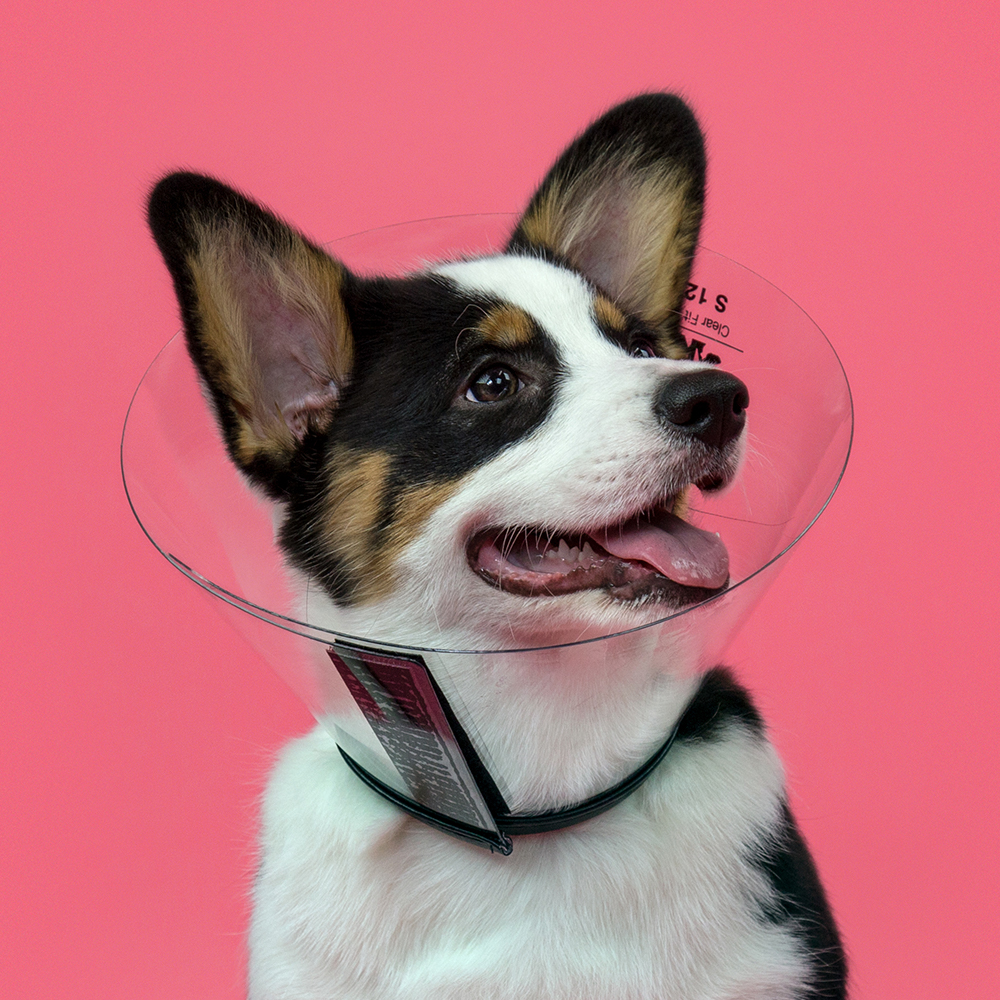 KVP Cone of shame E-collar -ClearFit