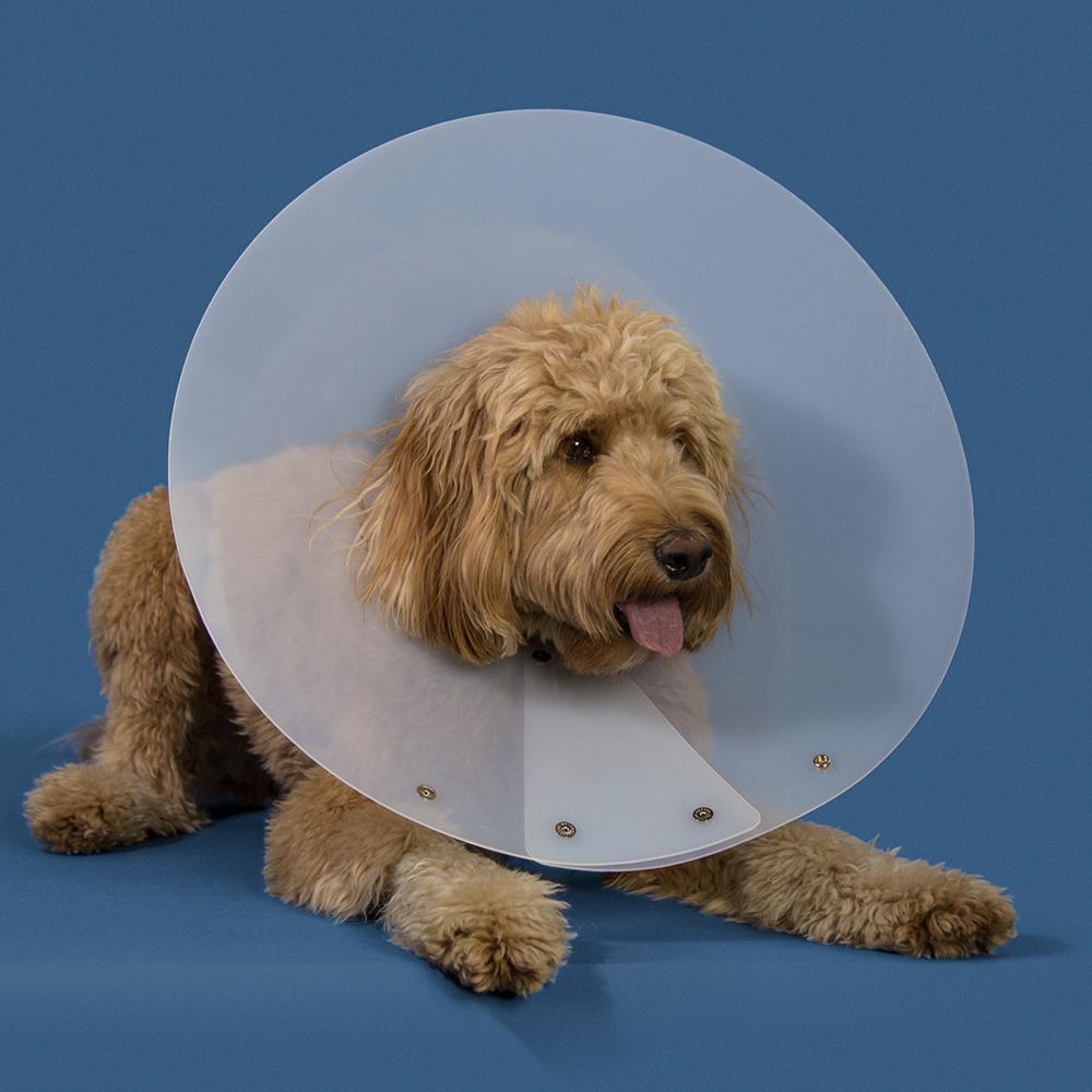 KVP Cone of shame E-collar - Saf-T-Shield