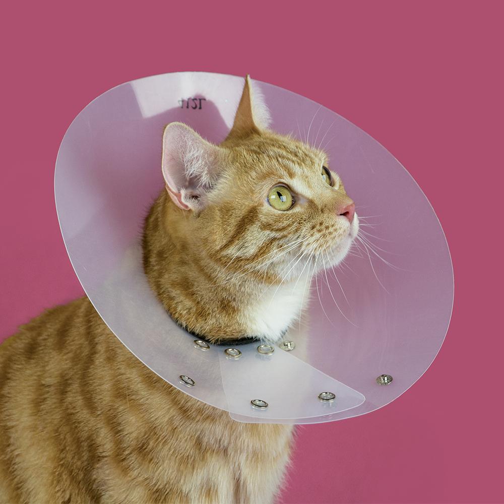 Saf-T-Shield™ — Felines & Small Pets