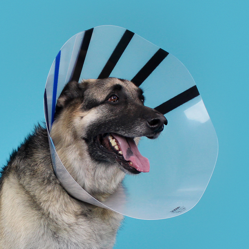 KVP Cone of shame dog E-collar - ez clear recovery collar