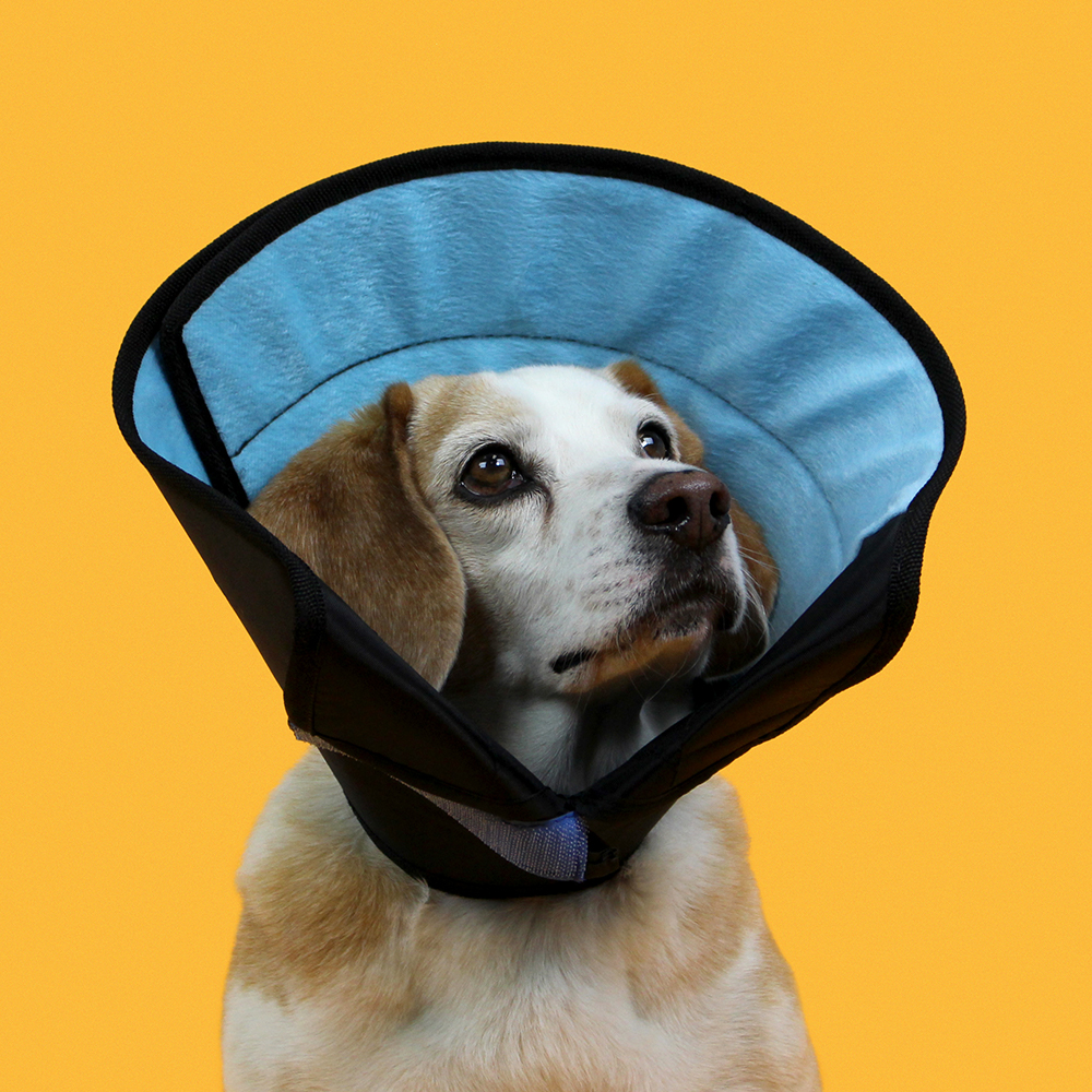 KVP Cone of shame dog E-collar - premium calmer recovery collar fear free