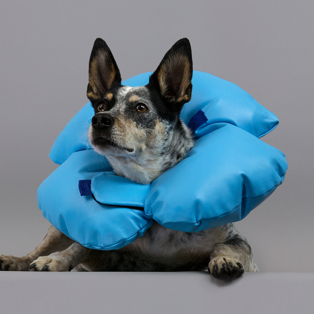 KVP Cone of shame dog E-collar - premium air o cushion recovery collar