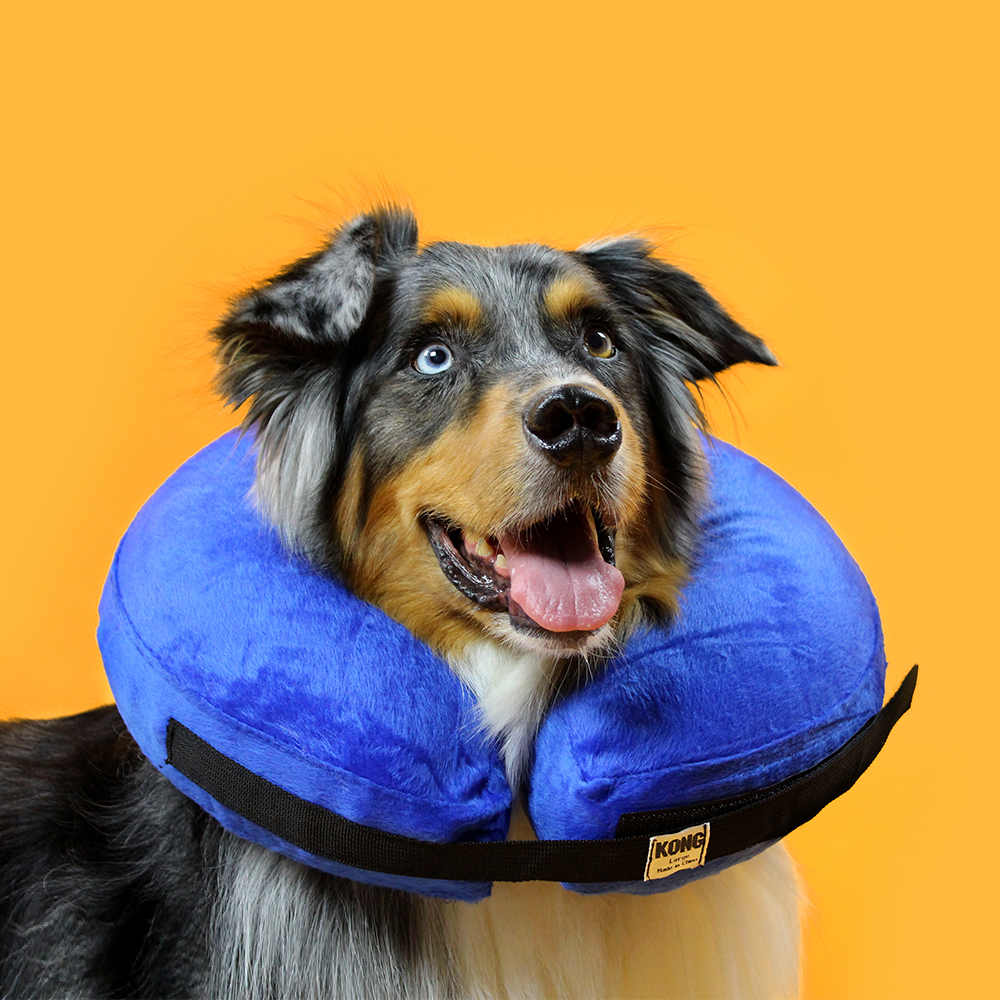 KVP Cone of shame dog E-collar - premium kong cloud cushion recovery collar