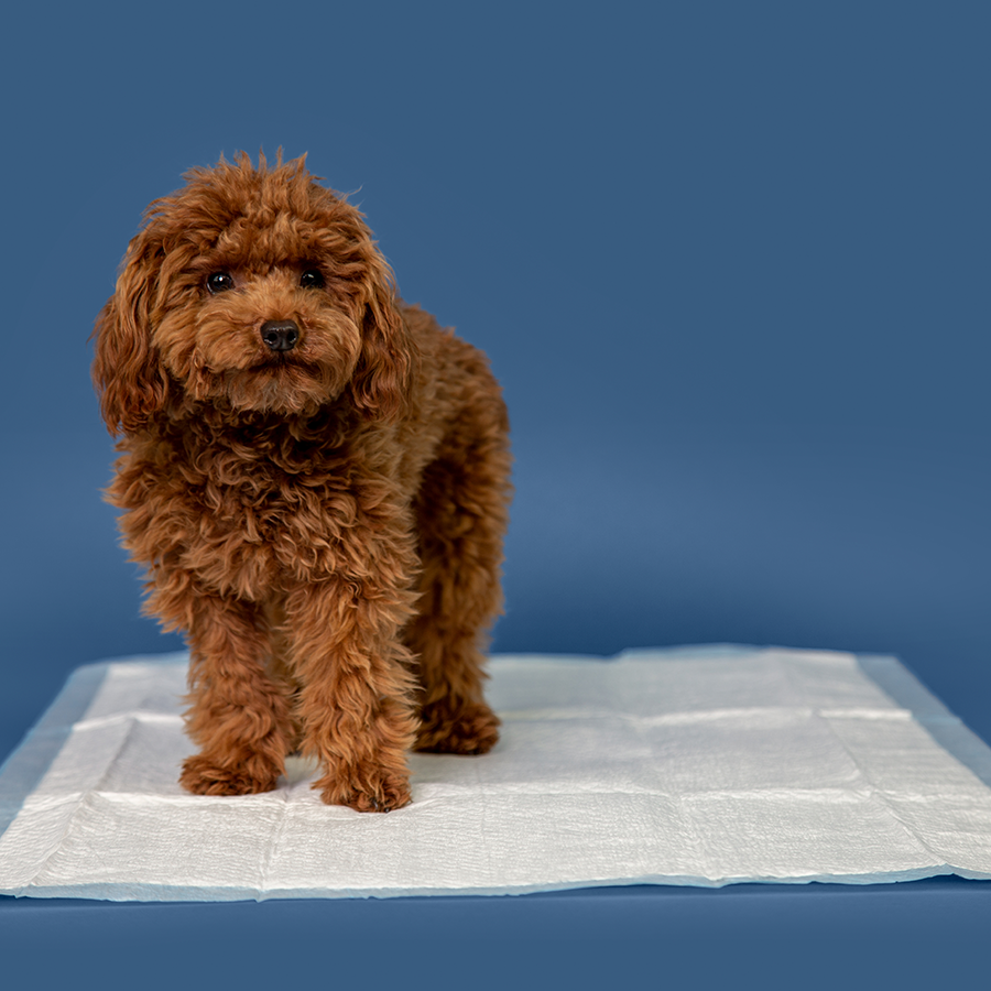 64_Tomy_Kennel_Pad_9434_2.png