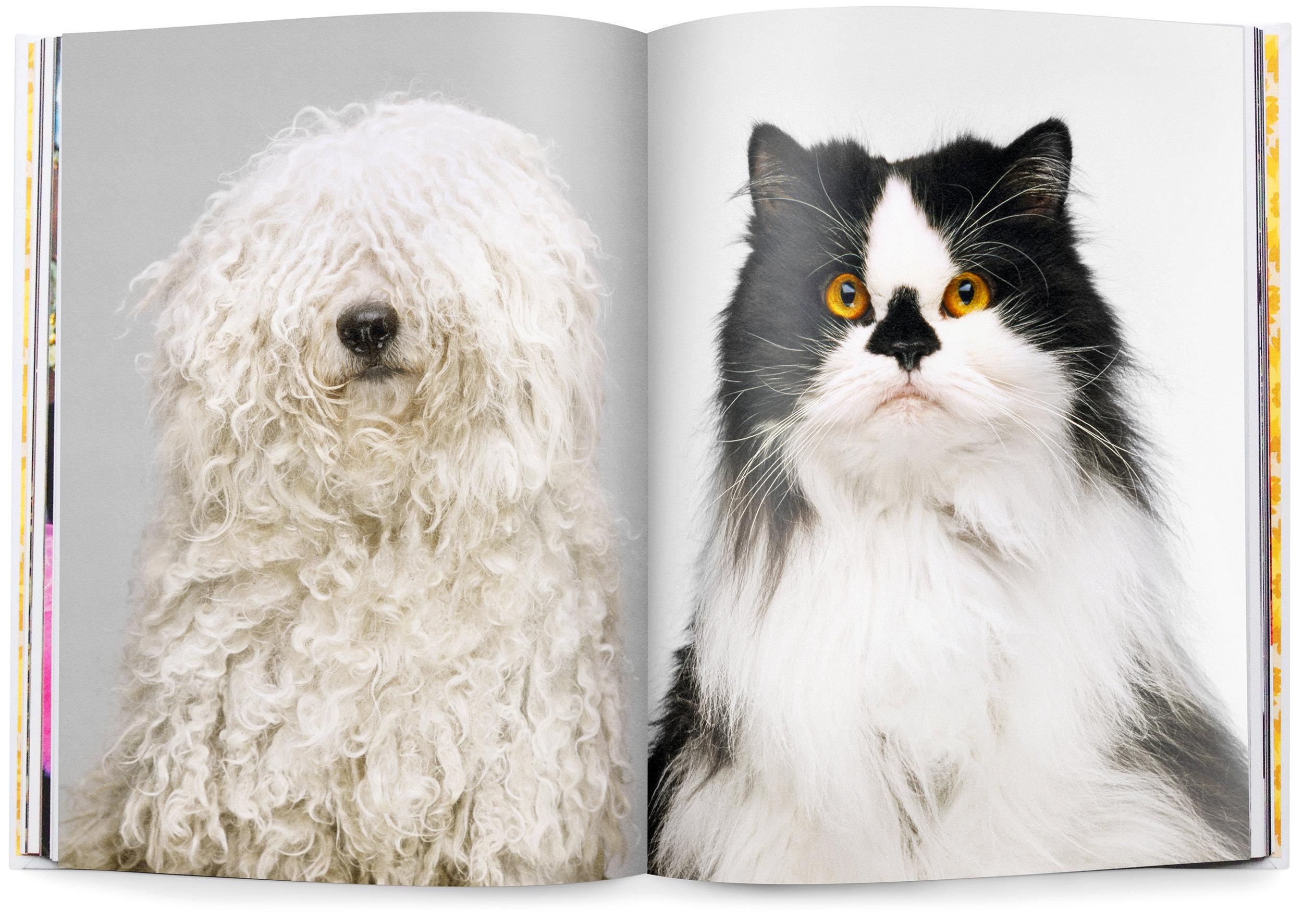 Trisha_Groves_FlashBack_book_animals_1.jpg