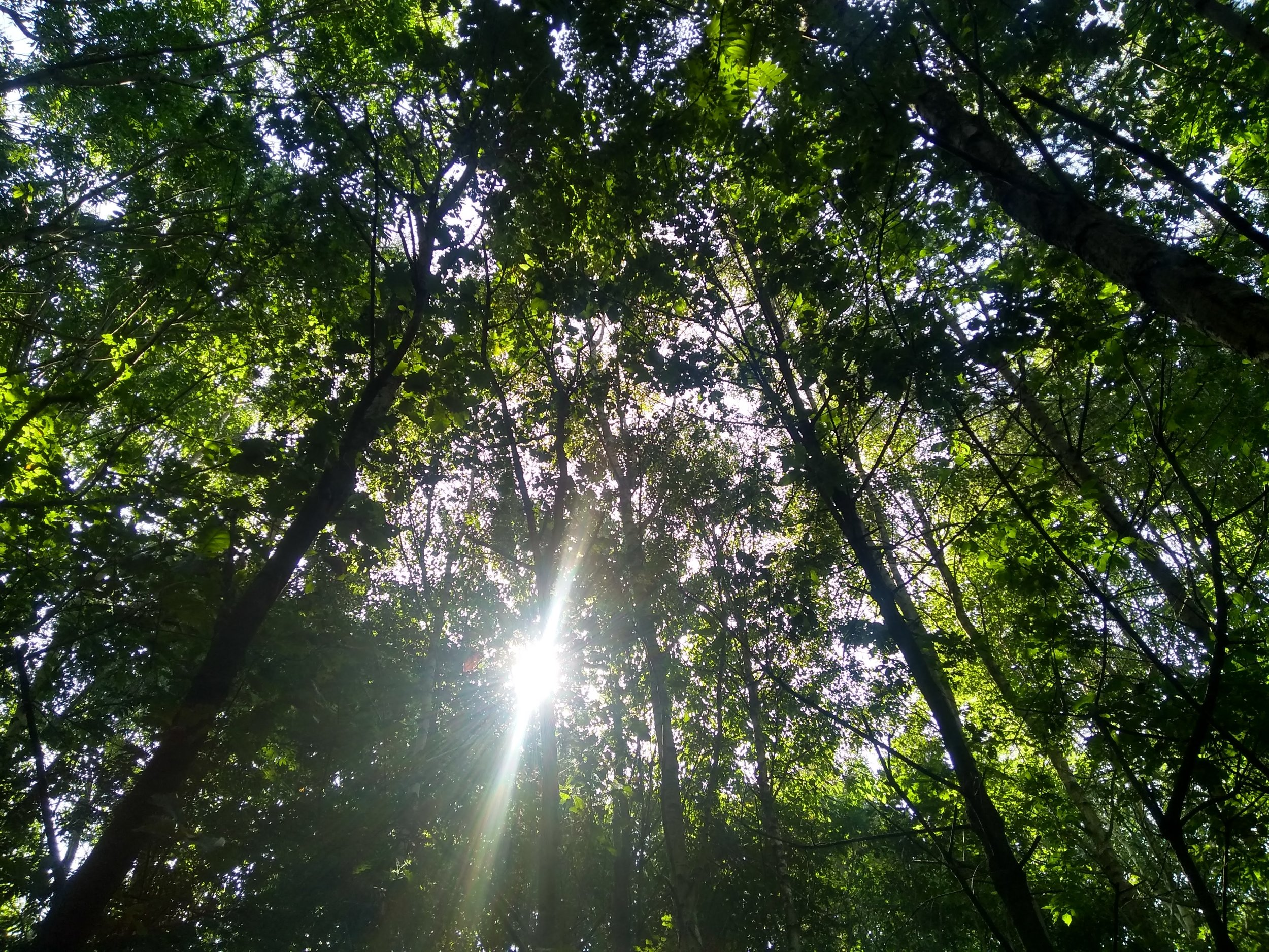 leaf_canopy.jpg