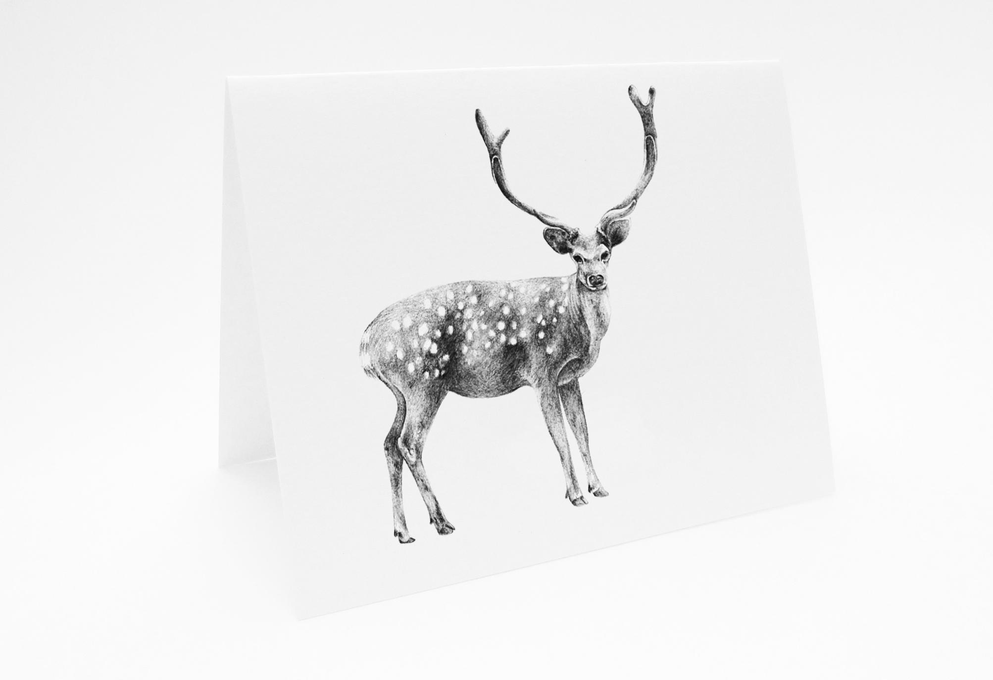 Deer - Landscape