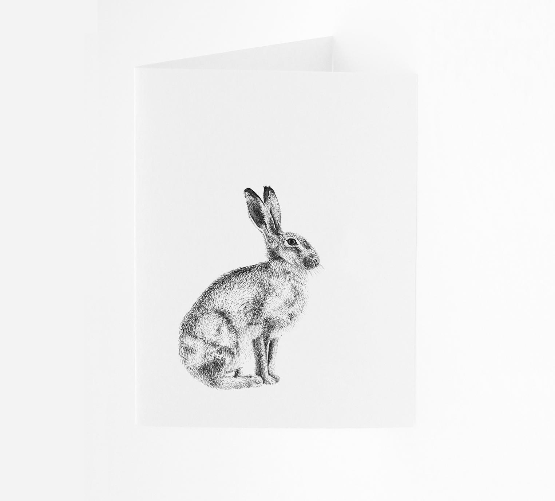 Hare - Portrait