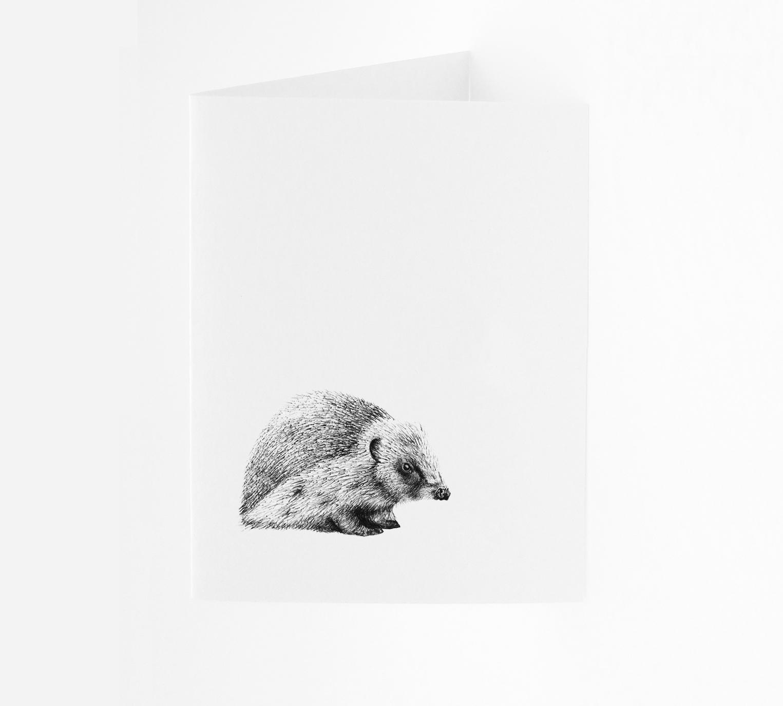 Hedgehog - Portrait