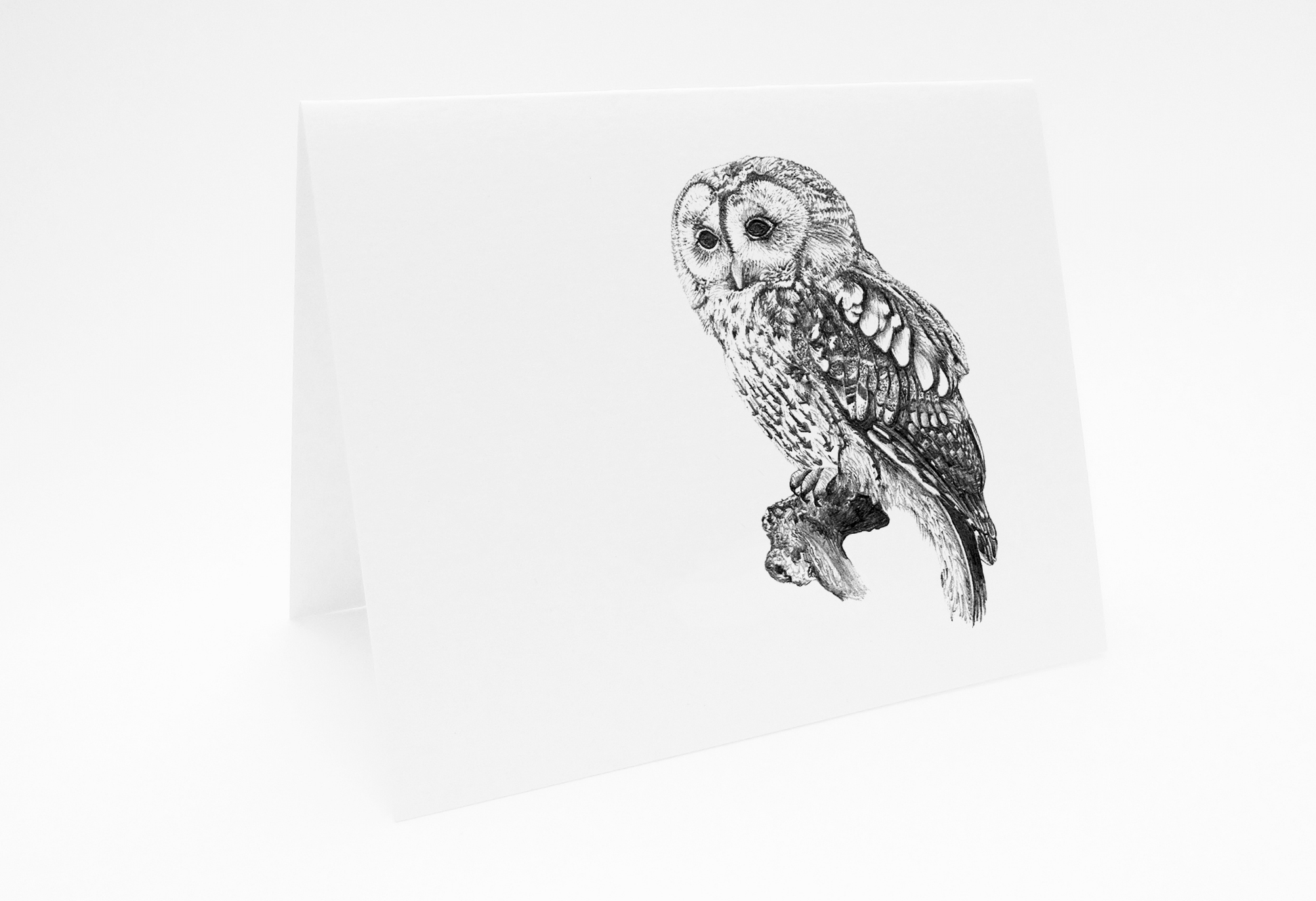 Owl - Landscape