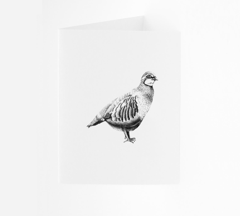 Partridge - Portrait