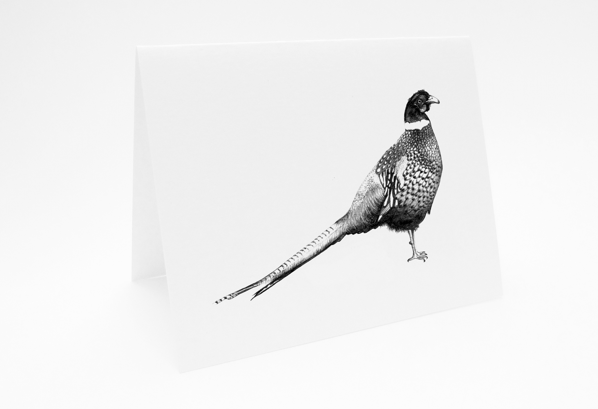 Pheasant - Landscape