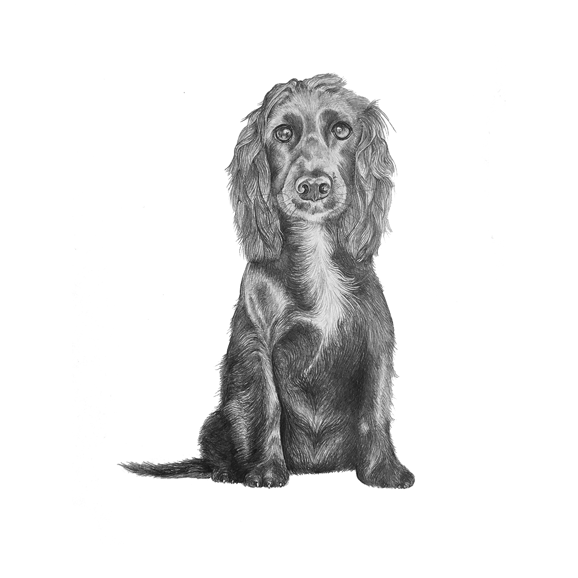 Pet portrait drawings from £45