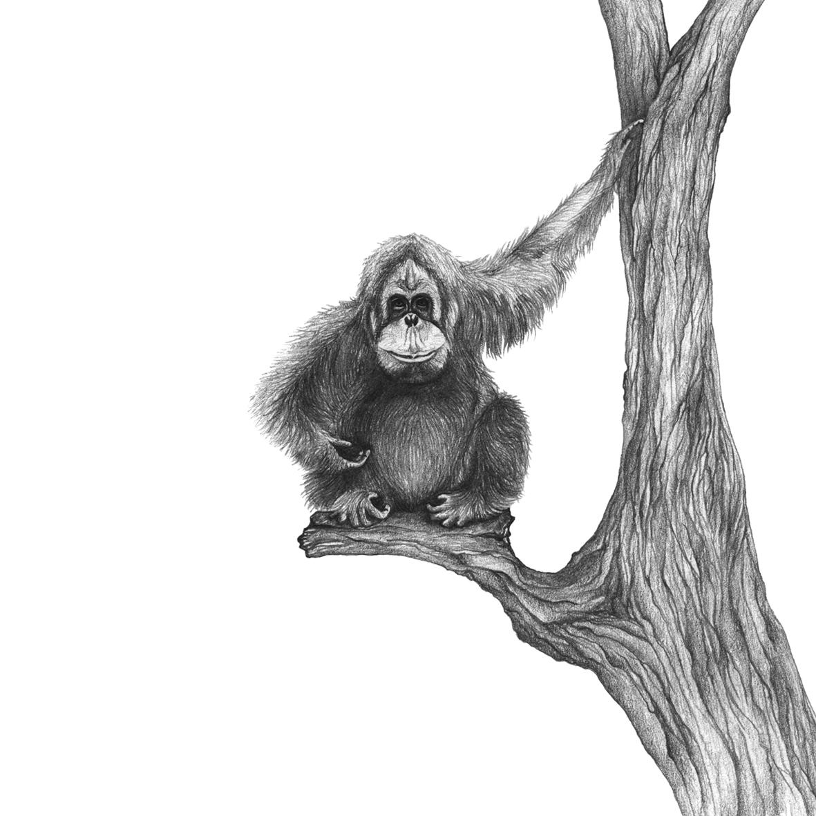 LaleGuralp_Orangutan3.jpg