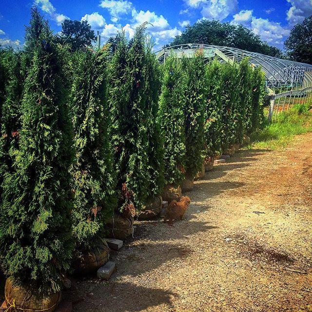 landscaping-trees-ann-arbor-margolis-companies.jpg