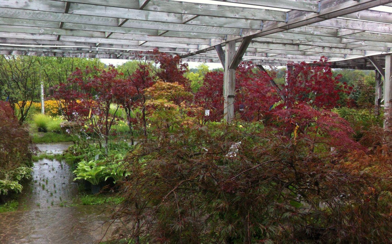 Margolis Nursery Local Plants For