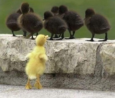 """""""Hmmm… maybe if I buy some black duck fur, they'll let me in."""""""