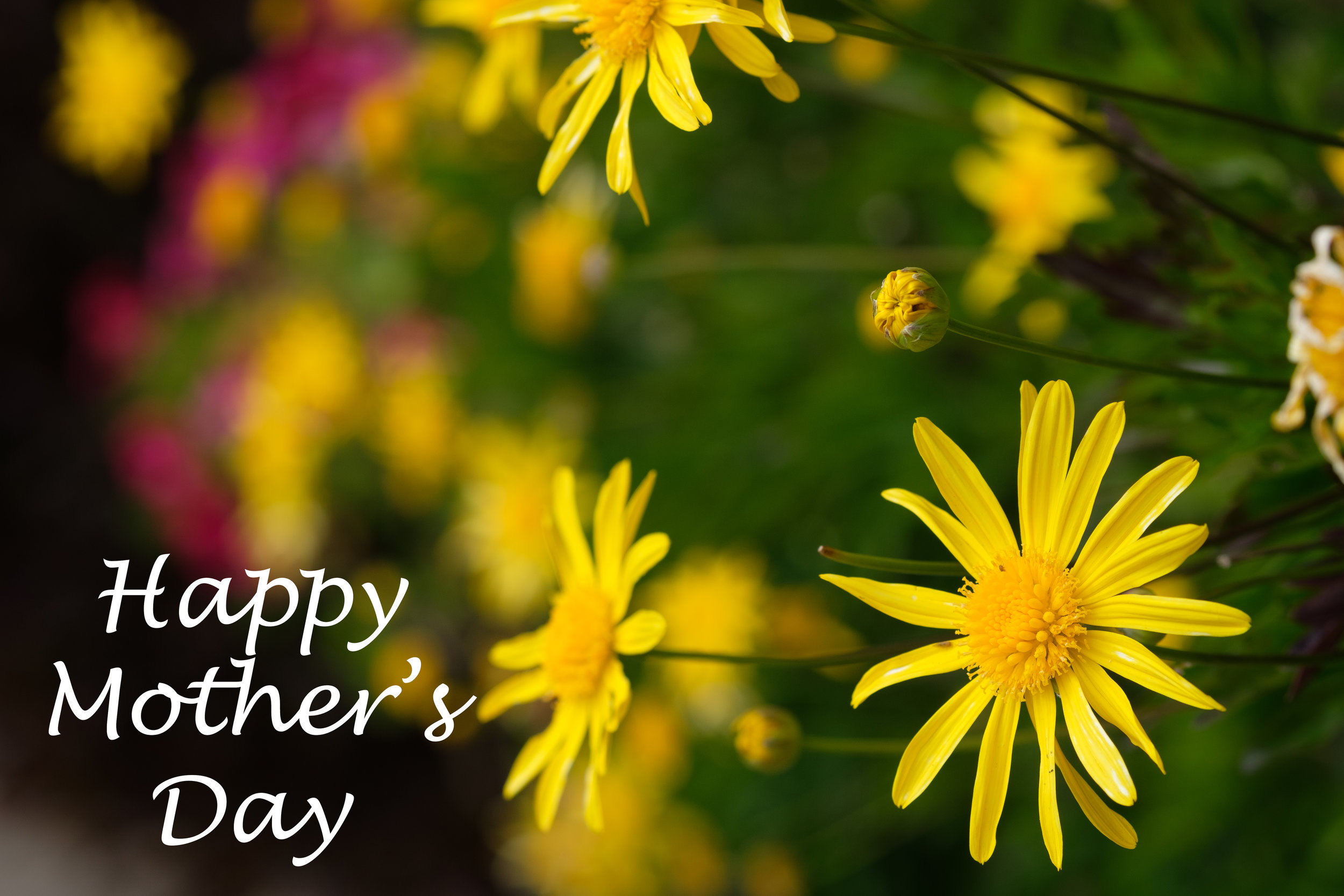 XH1B2924-Edit - Mother's Day 2019 Large.jpg