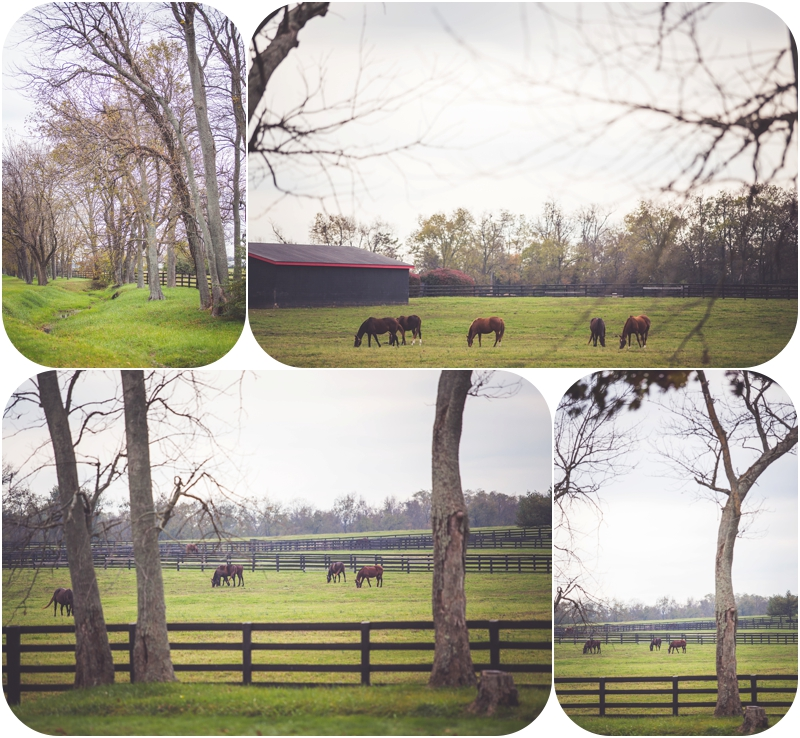 Fasig Tipton Lexington Horse Farm