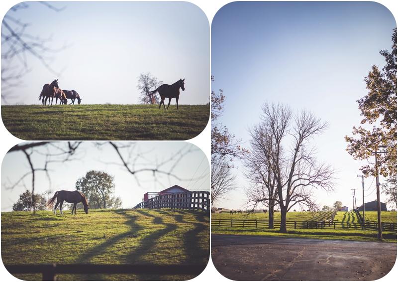 horses running on lexington KY farm photos