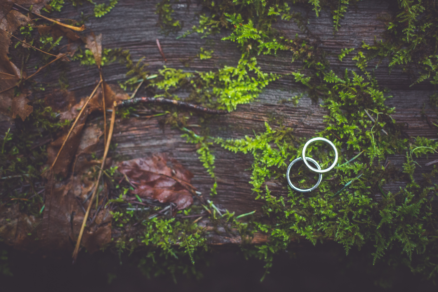 cathedral-grove-elopement-photos-33.jpg