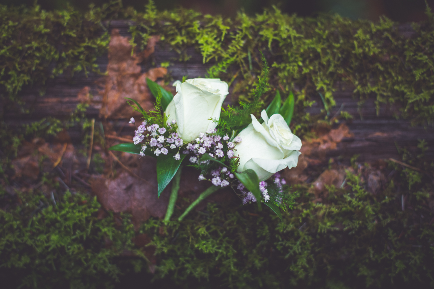 cathedral-grove-elopement-photos-32.jpg