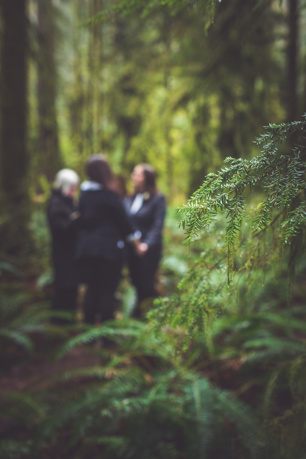 cathedral-grove-elopement-photos-19.jpg