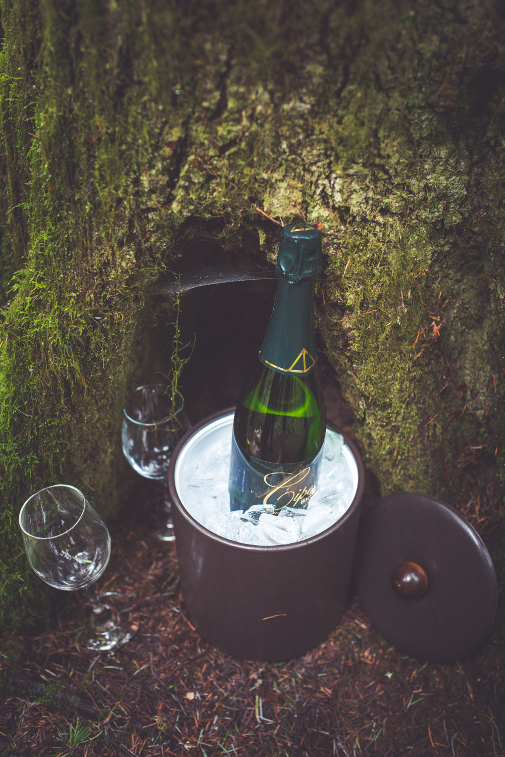 cathedral-grove-elopement-photos-13.jpg