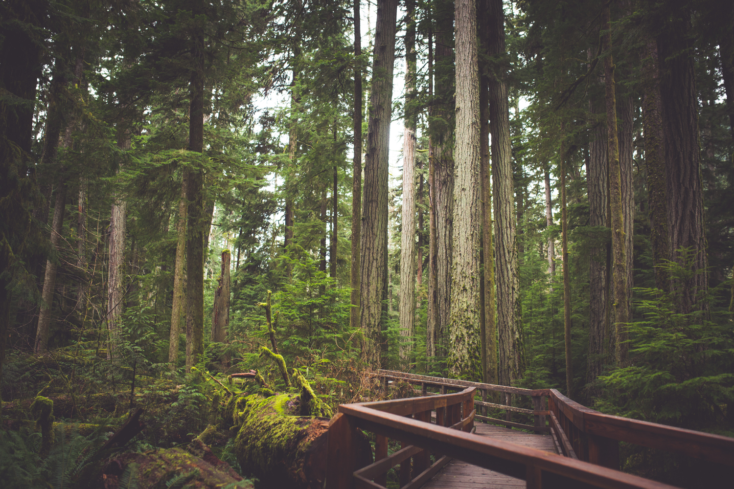 cathedral-grove-elopement-photos-9.jpg