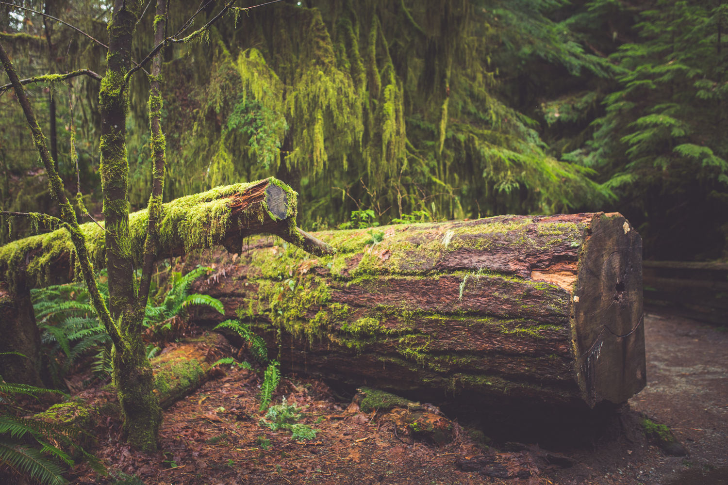 cathedral-grove-elopement-photos-8.jpg