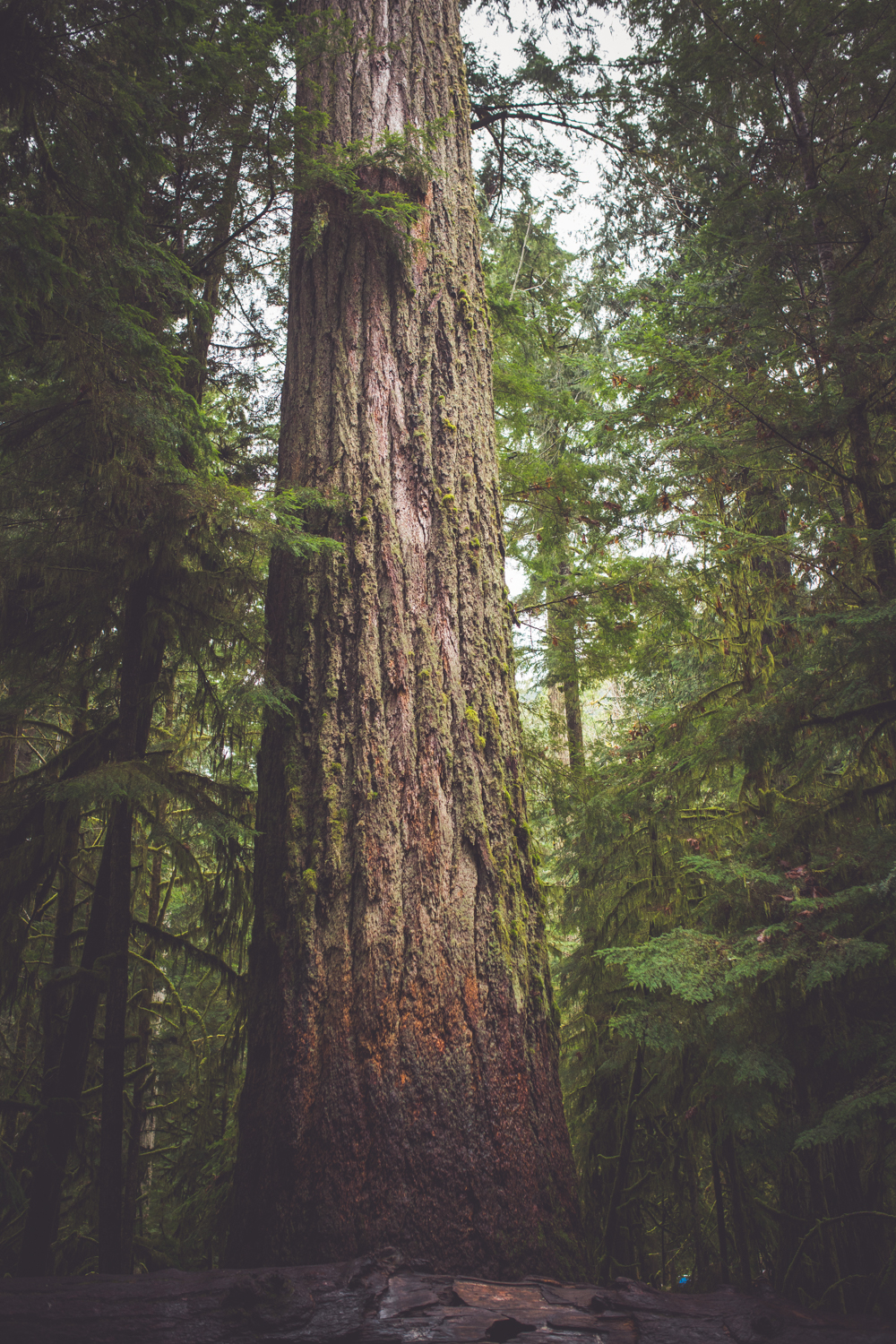 cathedral-grove-elopement-photos-7.jpg