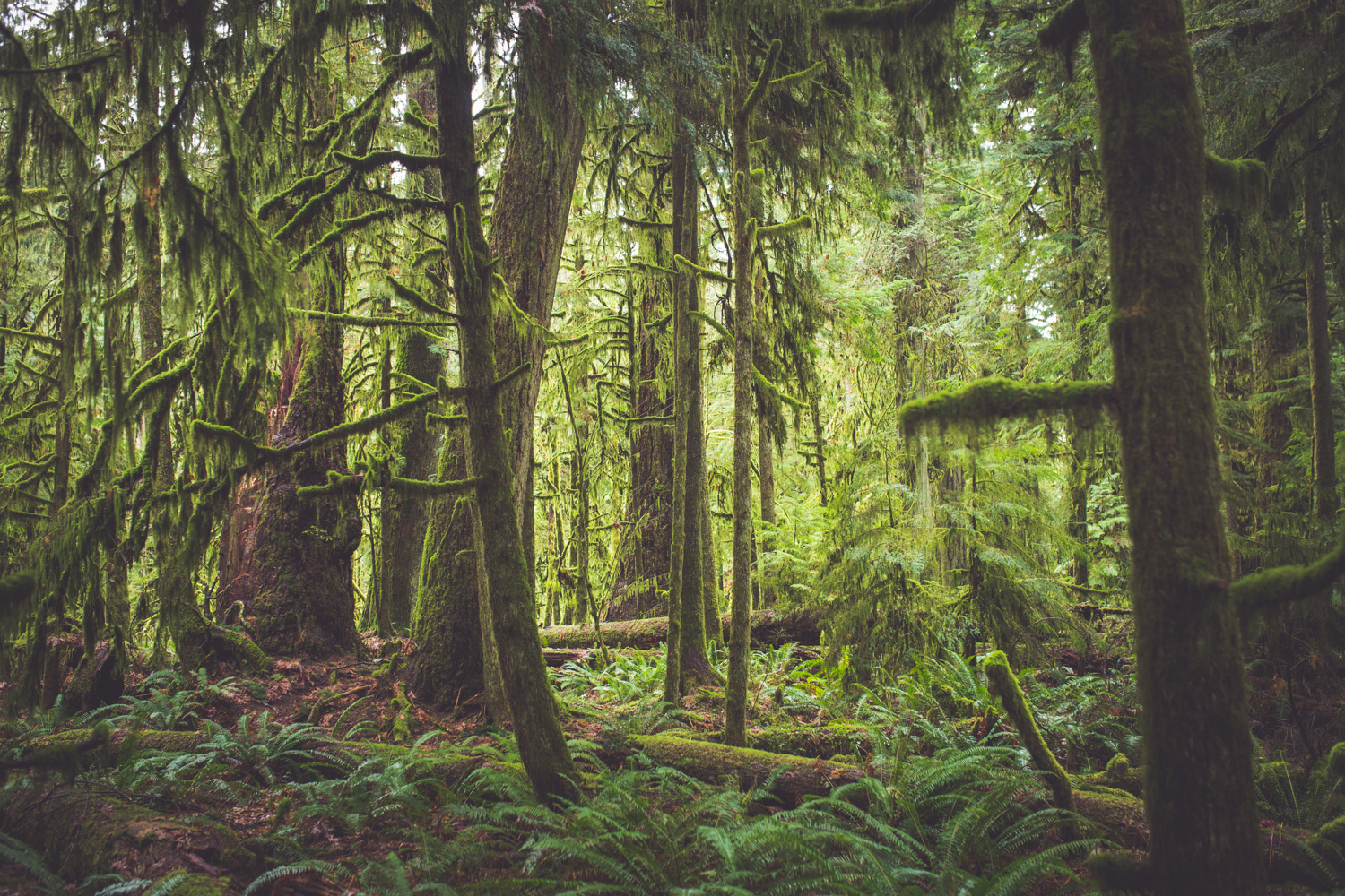 cathedral-grove-elopement-photos-6.jpg