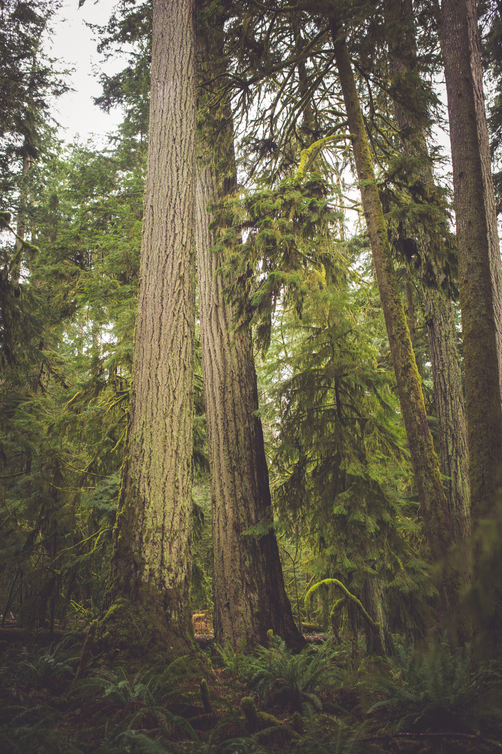 cathedral-grove-elopement-photos-5.jpg